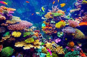 stock-photo-coral-reef-and-tropical-fish-in-sunlight-singapore-aquarium-243413140