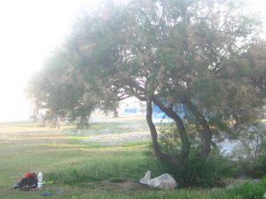 tamariu vilanova